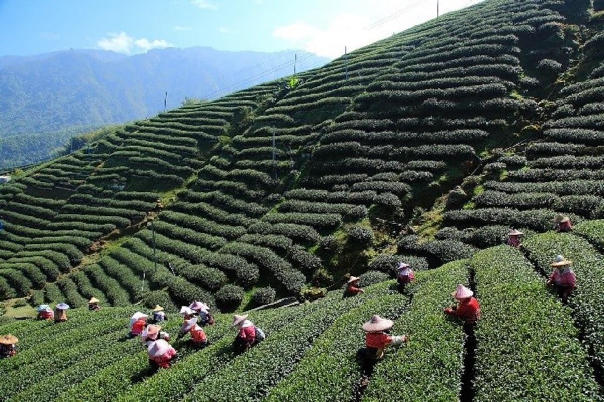 Travel,Darjeeling,Best places to see in Darjeeling