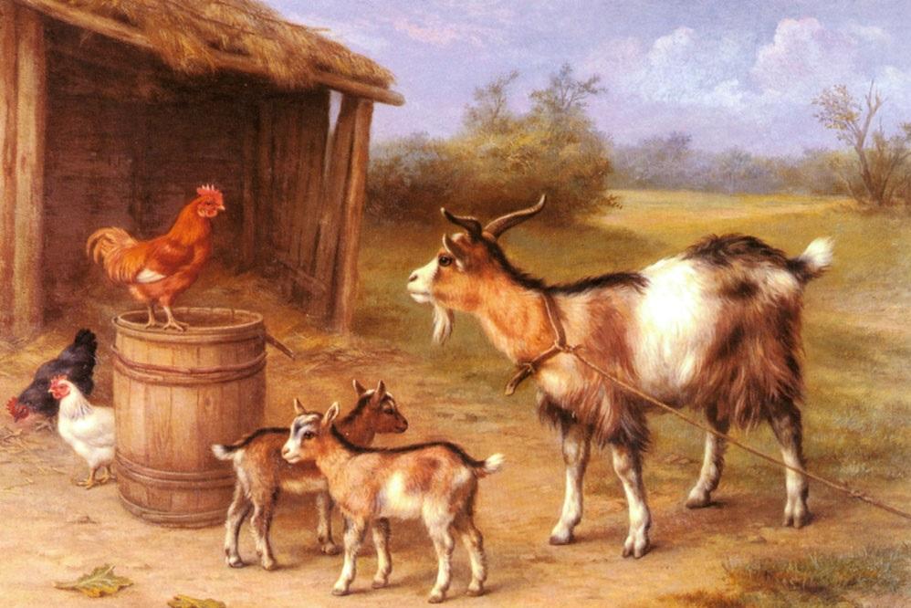 chicken vs mutton the fight continues