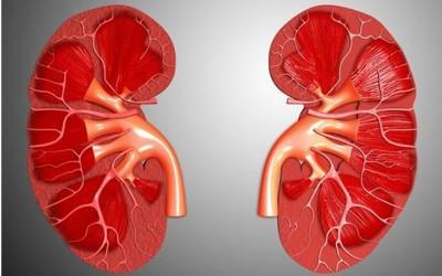 Kidney transplants