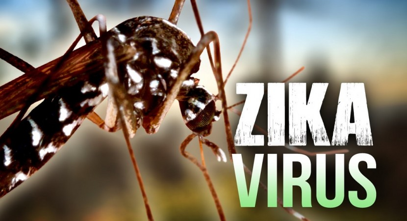 Virus,Zika Virus,Microcephaly,America