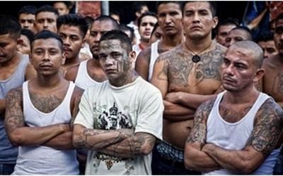 MS 13 criminal gang