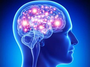 Brain, intelligence quotient,University of Warwick researchers