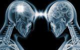 Brain, intelligence quotient,University of Warwick researchers