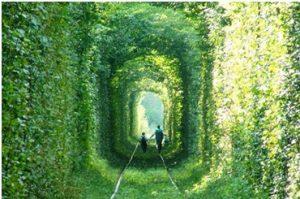 Tree tunnels