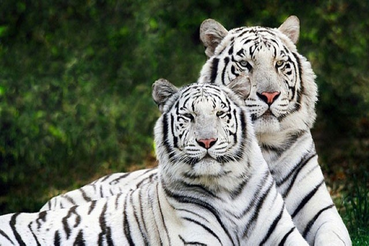 Top10, Popular Zoo,India, Zoo,Animal Park, Bird,Reptiles,Botanical Garden