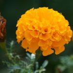 India,Herbs,Medicinal Herbs,Natural Remedies