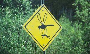 Mosquitoes, Mosquito Bite