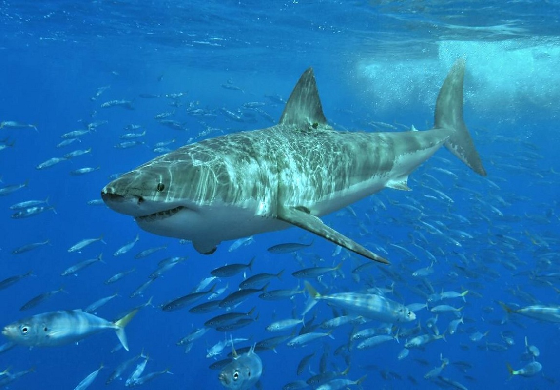 America,Sharks Attack,Beaches, Beaches In US With Most Shark Attacks