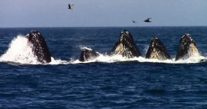 Best Places For Whale Watching In California, California, Whale Watching
