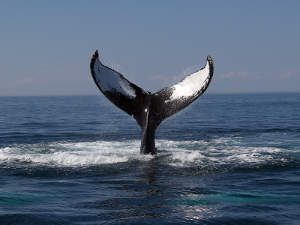 Best Places For Whale Watching, California, Whale Watching